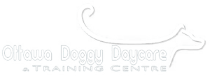 Ottawa Doggy Daycare and Training Centre